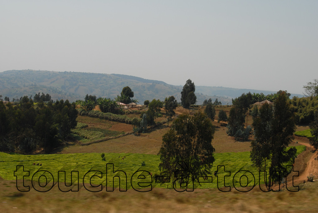 Green countryside near Rutana in rural southern Burundi