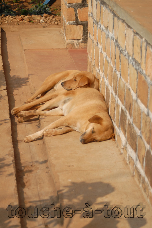 Dogs lying on one another in the sun