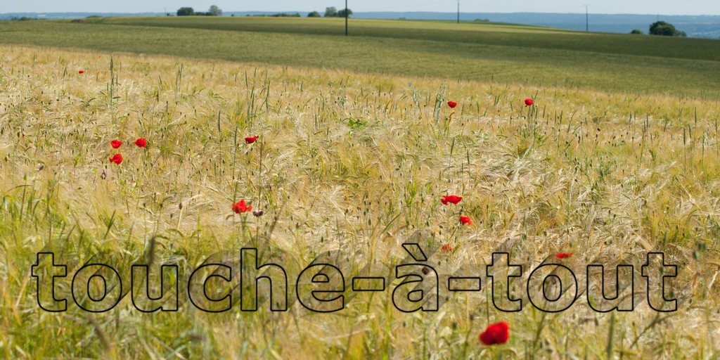Poppies in the fields, Morvan National Park