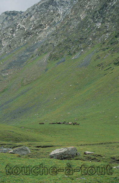 Horses grazing in the Tien Shan mountains, Kyrgyzstan