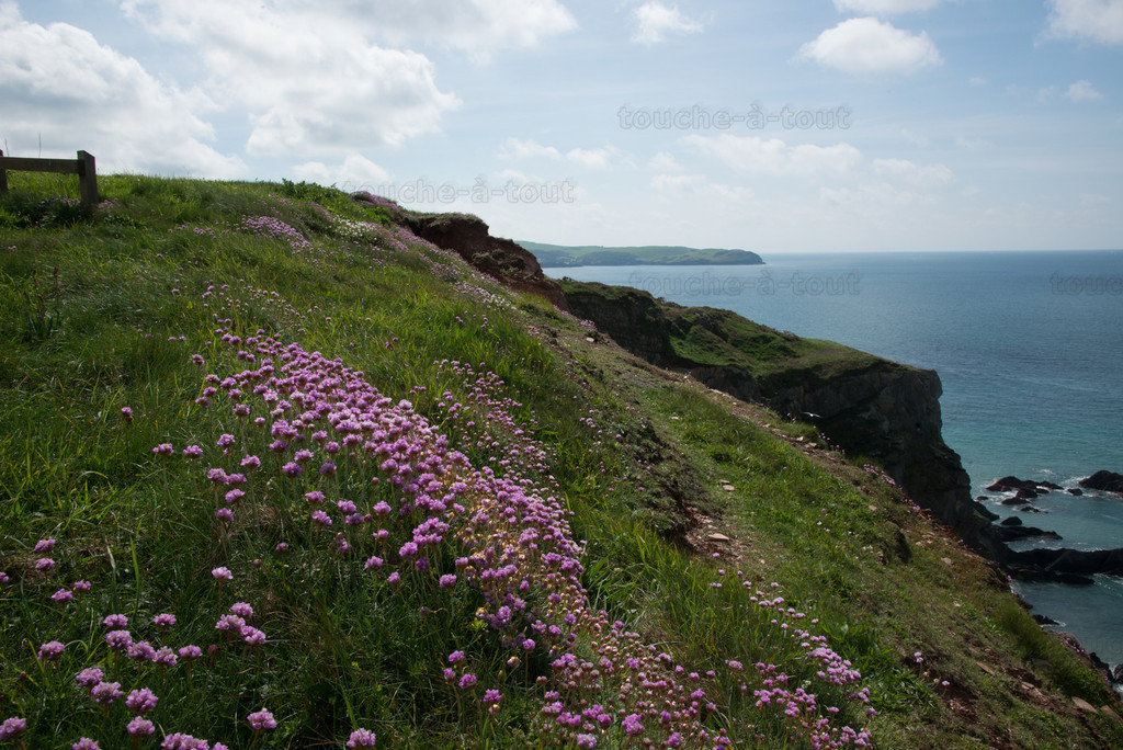 The south west coastal path towards Hope Cove