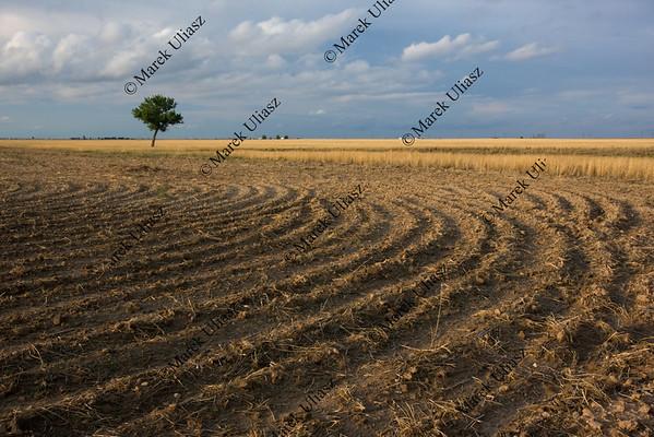 field plowed after wheat harvest