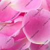 macro shot of pink rose petals