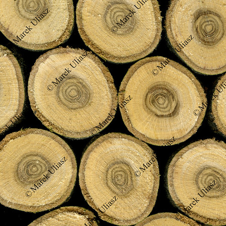 slices of oak wood