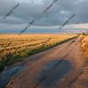 farm road in north eastern Colorado after rain storm