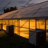 greenhouse glowing at night