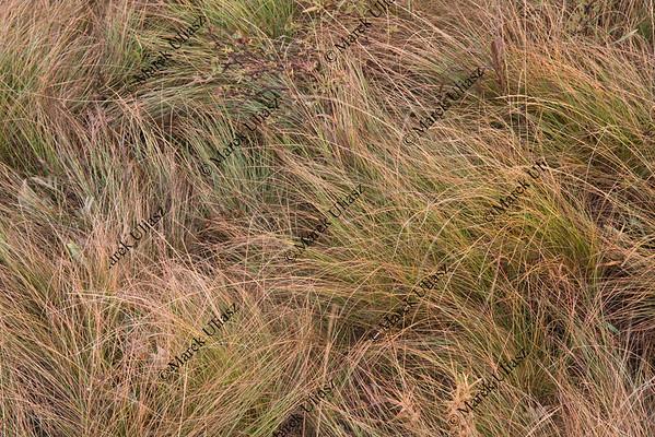 high mountain meadow grass