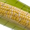 corn on the cob macro