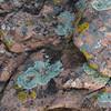 sandstone with lichen background