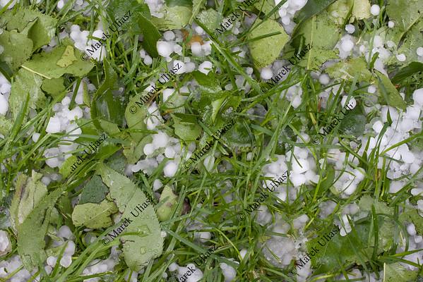 pea size hailstones on grass