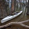 white canoe on lake with submerged forest