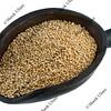 scoop of quinoa grain