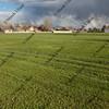 grass field freshly mowed