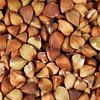 buckwheat kasha at life-size