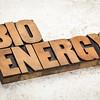 bioenergy word in wood type