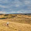 moutain biking in a rolling prairie