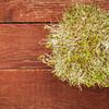 alfalfa and radish sprouts