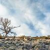 tree, sagebrush and rocks