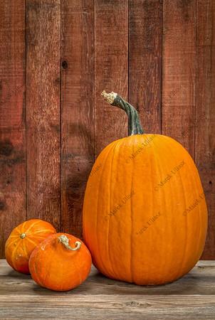 pumpkin and winter squash