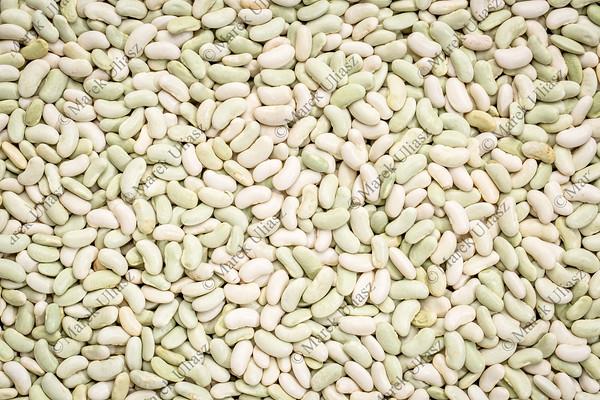 flageolet bean background