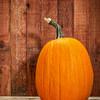 pumpkin and  rustic barn wood