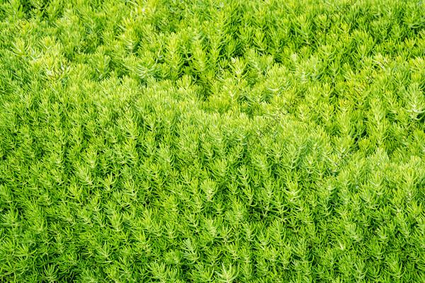 bright green foliage background