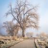 foggy morning on bike trail