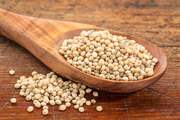 gluten free sorghum grain