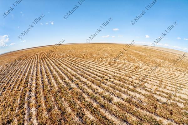 plowed field in fish eye perspective