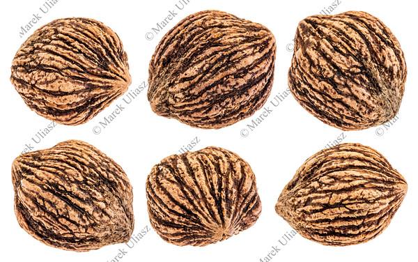 black walnuts isolated