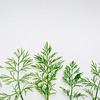 fresh green dill herb on art canvas