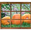 garden with pumpkin window view