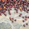 black quinoa grain