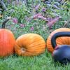 kettlebell and pumpkins