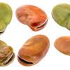 fava (broad) bean isolated