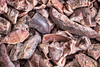 raw cacao nibs background