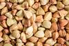 buckwheat grain at life-size