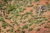 juniper tree at sandstone cliff