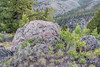 rock with lichen and wildflowers