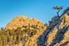 Horsetooth Rock and pine tree