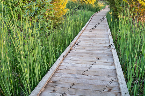 wooden boardwalk  across swamp