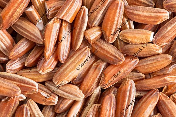 brown rice grain macro
