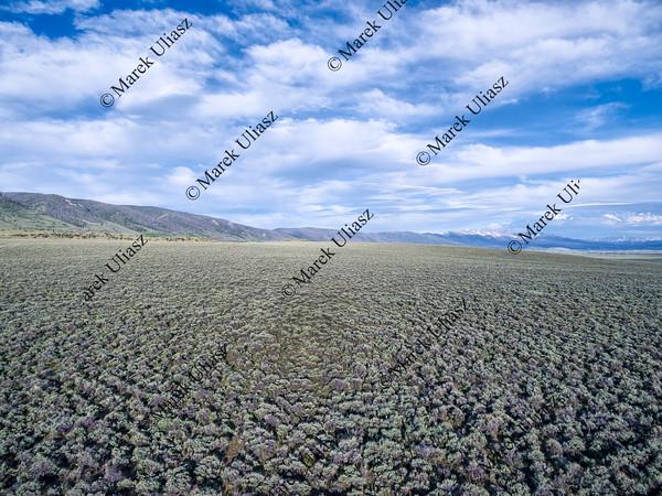 field of sagebrush aerial view