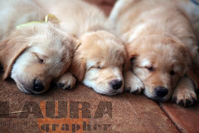 Nani's pups 1-09
