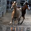 the horses154