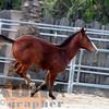 the horses120