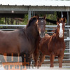 the horses170