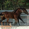the horses149
