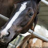 the horses108