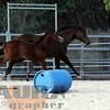 the horses150